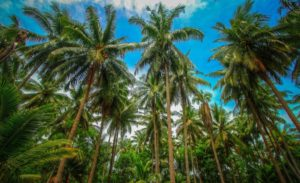 Pollachi-The_Coconut_Town_of_India_new